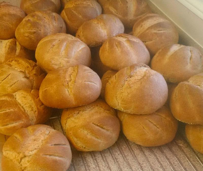 Whole Wheat Bread or Rolls